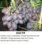 Костя.jpg