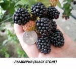 Ламберия Black stone