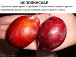 Исполинская.jpg